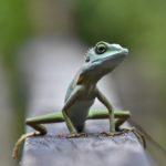 YOGA FACT: Mantra tegen ons 'reptielenbrein'